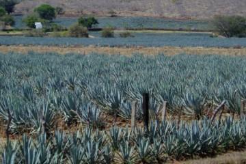Jalisco - Tequila