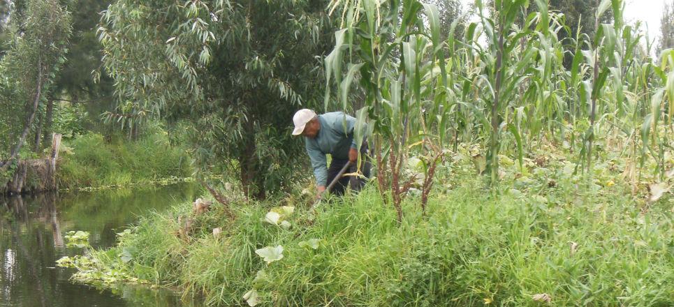 Hortalizas en Xochimilco