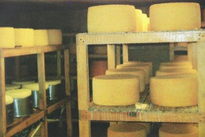 queso-cotija-busca-norma-mexicana_efbb0