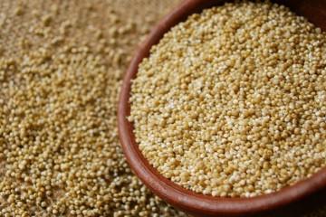 amaranto granos