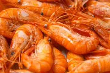 camarones Sinaloa