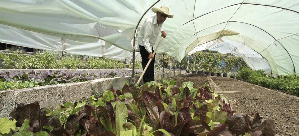 Qué es la agricultura orgánica