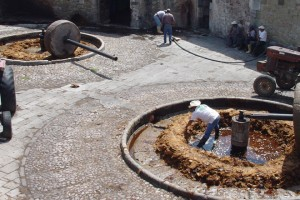 Mezcal de Zacatecas